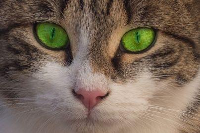 Katze Gesicht