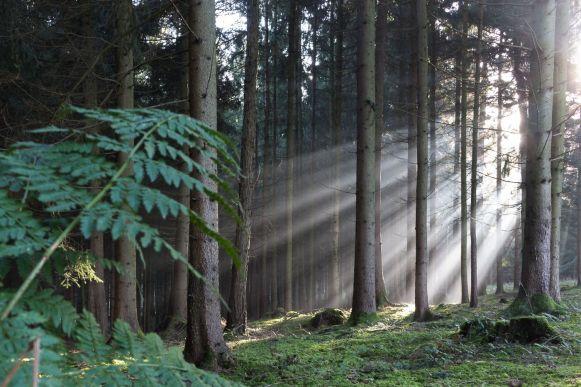 Wald Sonnenschein