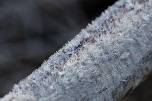 Frostnadeln