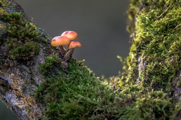 Mushroom at Tree the 2nd