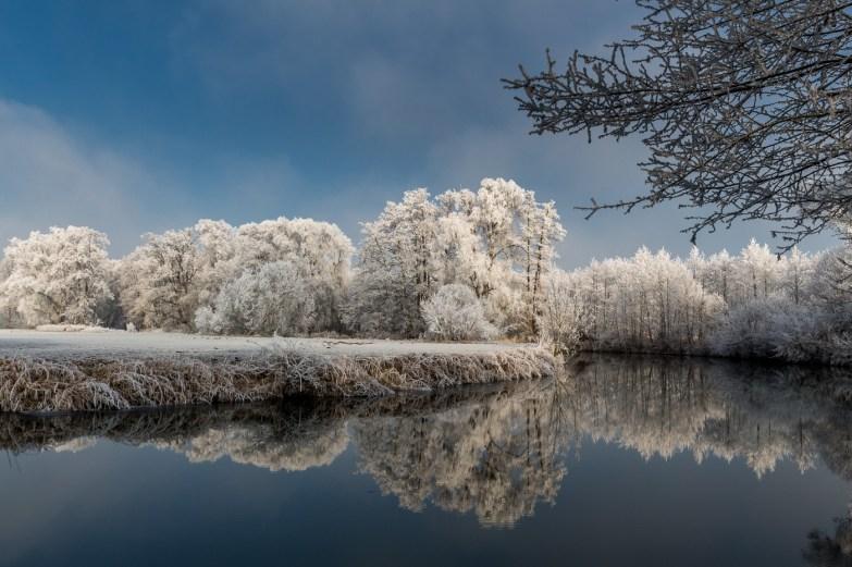 Mirroring Trees