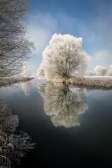 Mirroring Tree