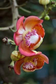 Eine Schmarotzerpflanze