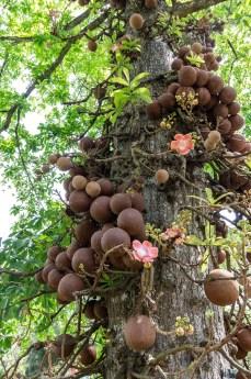 hier mit Früchten und Blüten