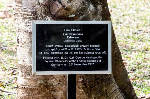 Fast jeder namhafte Politiker aus dem Ausland hat hier einen Baum gepflanzt