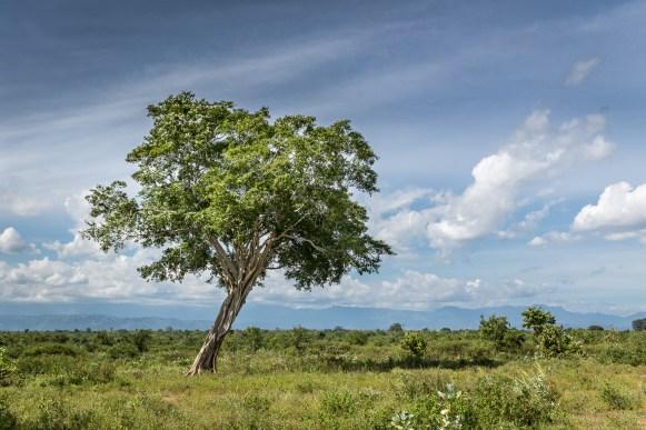 Landscape in Sri Lanka #Landscape #SriLanka