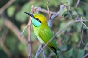 Bea Eater Sri Lanka #BeaEater #Bird #SriLanka