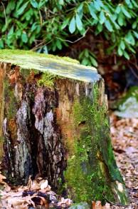 mossy stump