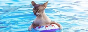 cats-in-swimming-pools-101