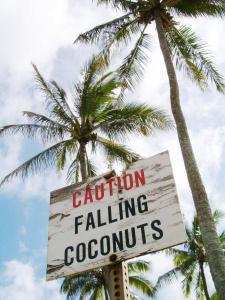 FallingCoconuts_sm