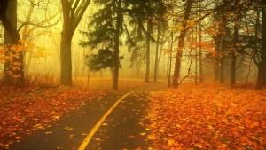 Walking-path-in-autumn-park