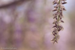 Lensbaby Garden-1