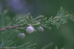 Lensbaby Garden-12