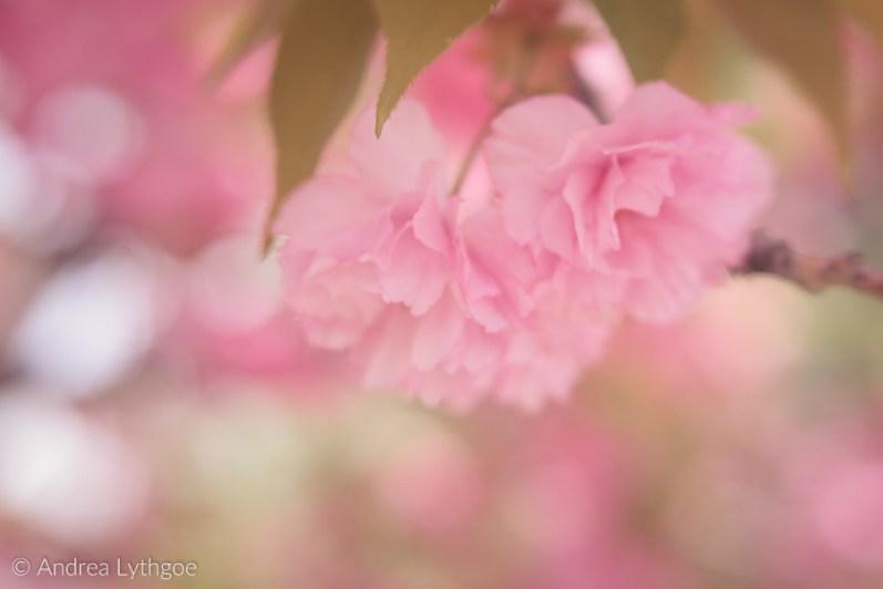 Lensbaby Garden-3
