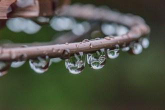 Wet Feeder-13
