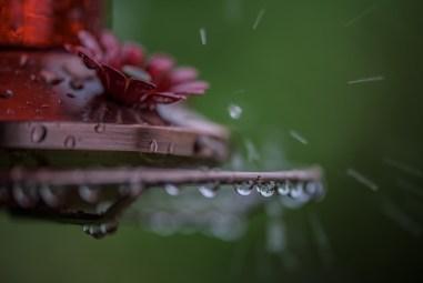 Wet Feeder-4