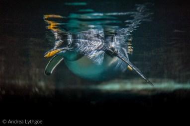LBT-Aquarium-7