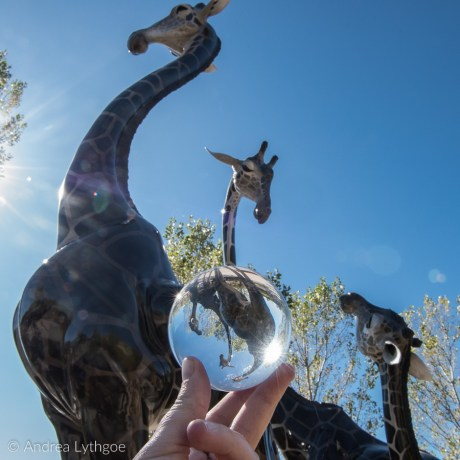 Giraffe Family-1