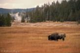Yellowstone 2018 Big Batch-25