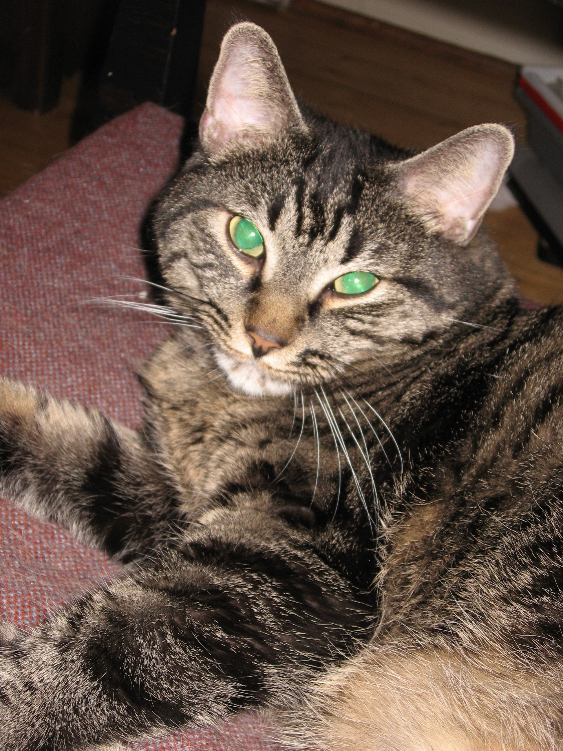 The Cat Formerly Known As Pyewackett the Magnificent *(now referred to as Pyewackett the Obnoxious)