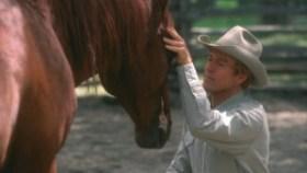 the-horse-whisperer