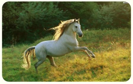 free_horse