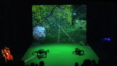 Garten - Performance Spinnen
