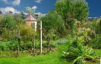 Garten Beet