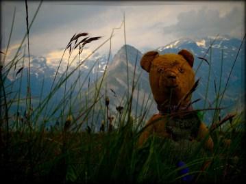 IMG_3872 Teddy13_72dpi
