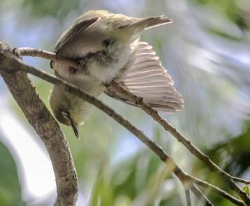 Sleeping Sparrow