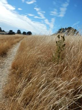 De wind waait door het gras