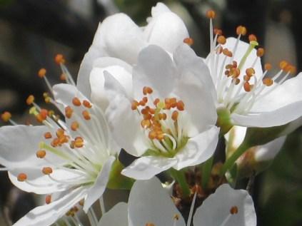 primavera-a-vertine-11