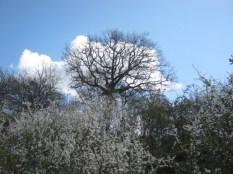 primavera-a-vertine-35