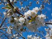primavera-a-vertine-6
