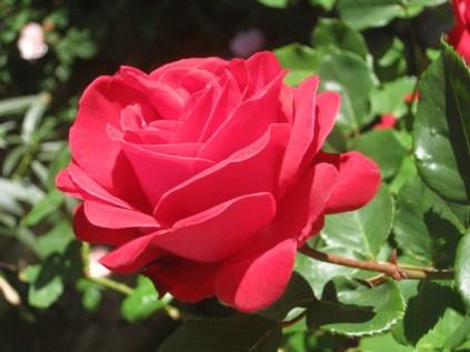rosa-pagliantini-4