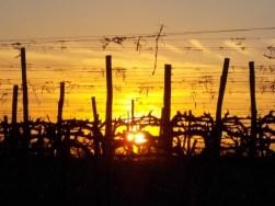 tramonto-sulle-vigne-del-sangiovese-4
