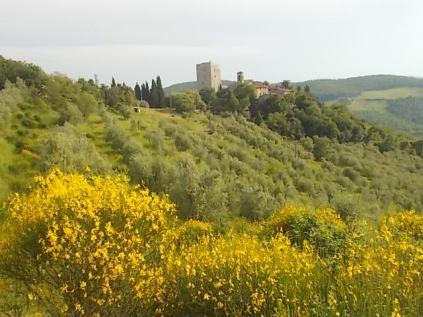vertine-ginestre-trono-edera-3