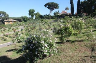 roseto di roma (10)