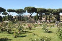 roseto di roma (14)