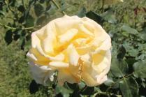 roseto di roma (38)