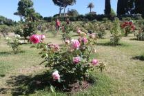 roseto di roma (5)