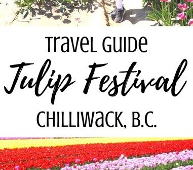 A travel guide to the Chilliwack Tulip Festival near Vancouver, B.C.