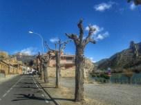 Nice trees in S. Llorenc de Montgai