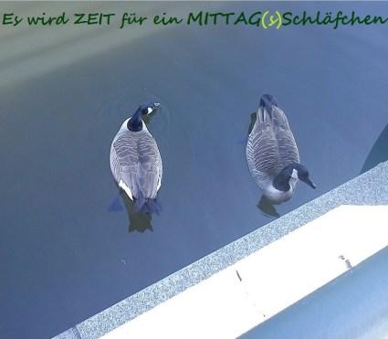 FLUG--WILDgänseZwieGeflüsterGESPRÄCH((e))8