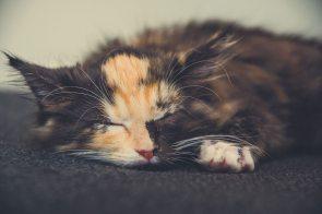 Lady Marley Monroe sleeping