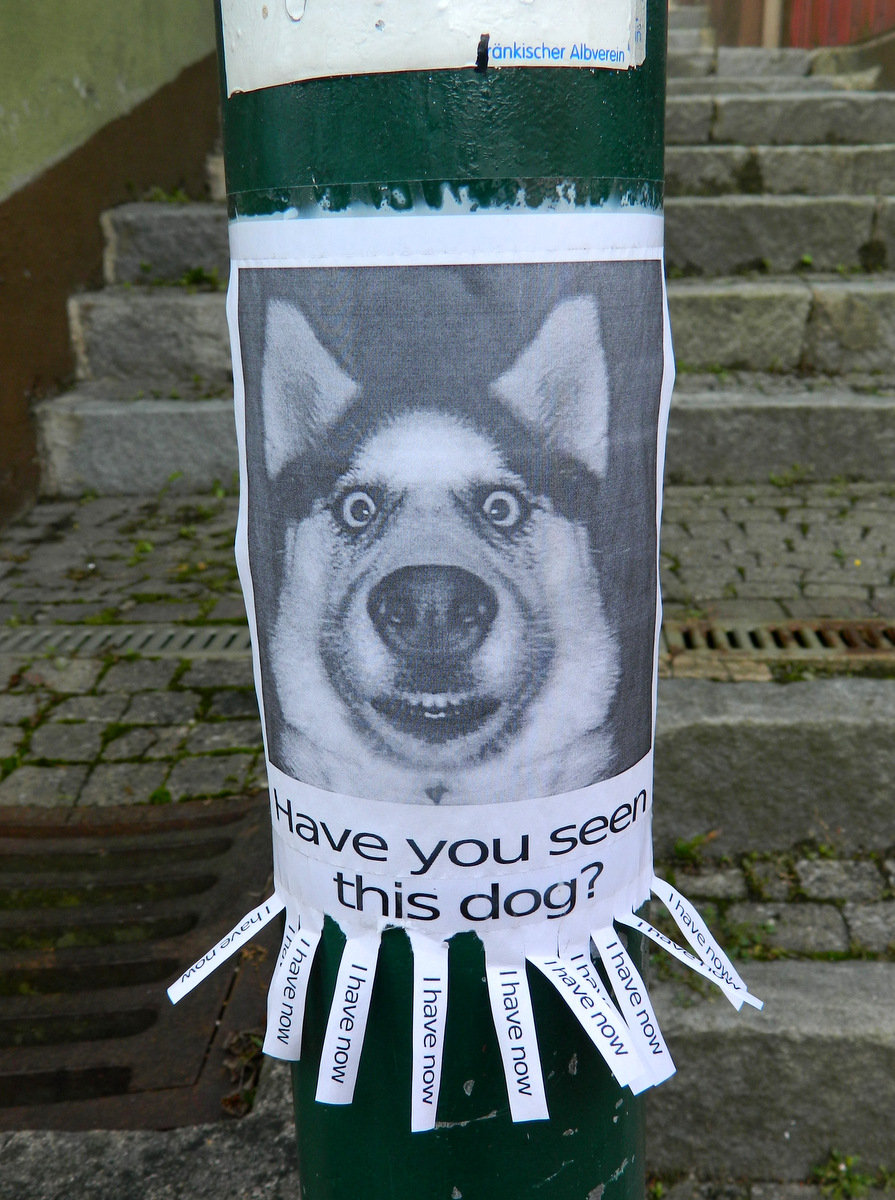 Have You Seen This Dog : Happy, Hermit