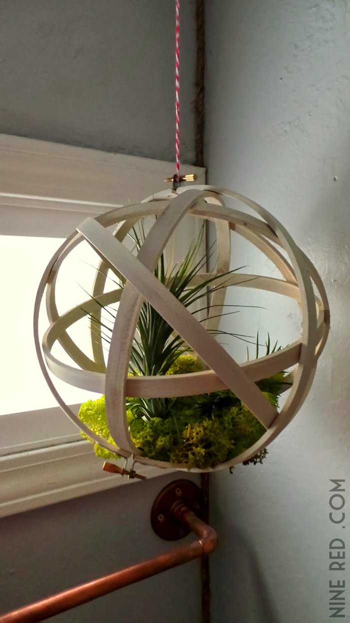 repurposed embroidery hoops make a home for air plants!