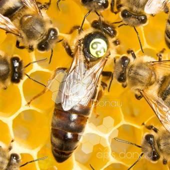Cum îngrijim corect familiile de albine