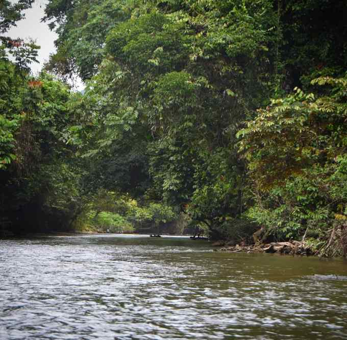 Gunung Mulu National Park, Sarawak, Malaysia, Borneo