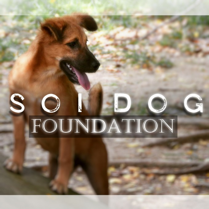 Soi Dog Foundation, Phuket, Thailand